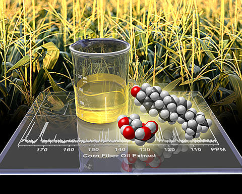 Biomass Conversion